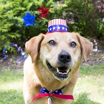 dog with a 4th of july party hat