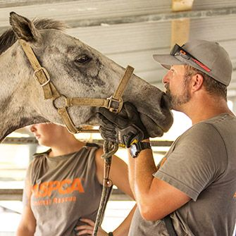 A horse with ASPCA volunteers