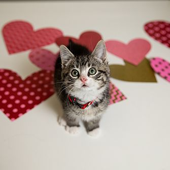 a kitten with hearts