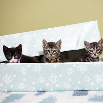 three kittens in a gift box