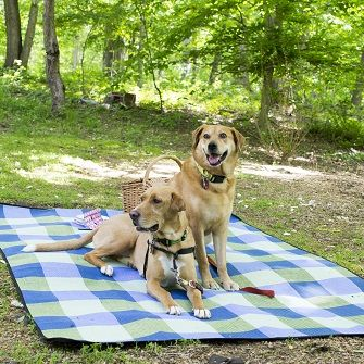 dogs on a picnic
