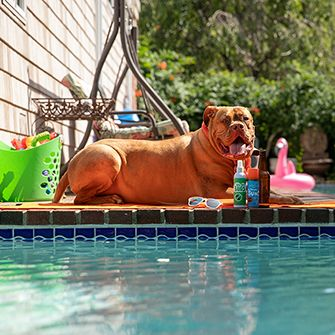 a dog resting by a pool
