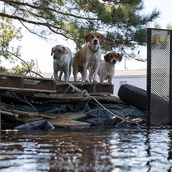 dogs stranded in a flood