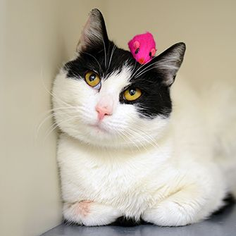a cat with a toy on their head