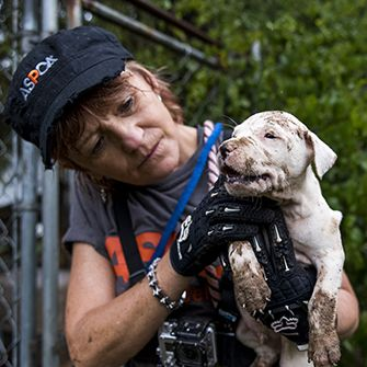 a dirty puppy being rescued from a dog fighting ring