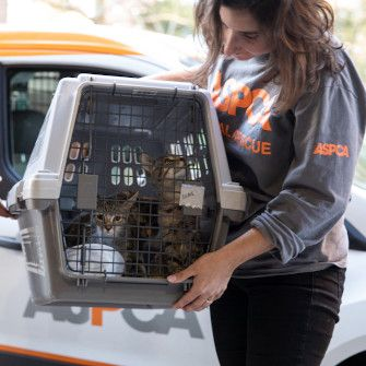 cats being transported by the ASPCA