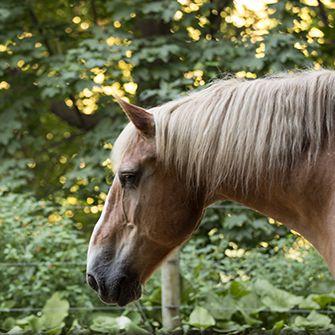 a sad horse