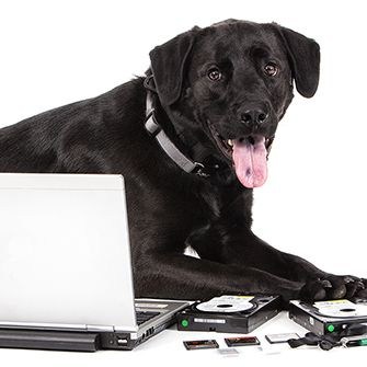 a black lab with a computer