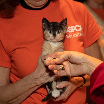 a woman in an orange aspca shirt holding a kitten