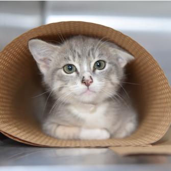 a kitten in a rolled up mat