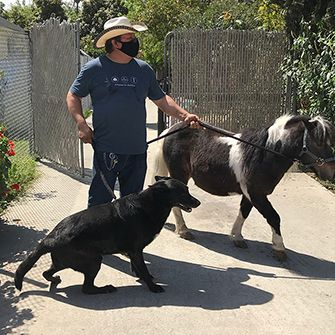 a man with a black dog and black and white pony