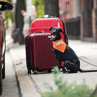 a dog with suitcases
