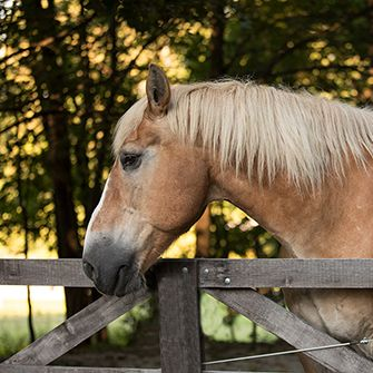 A horse outside by a fence