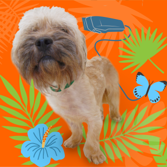 a dog with cartoon plants, butterfly, and a razor in the background