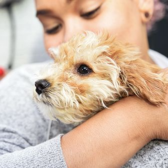 animal cruelty and puppy mills The humane society of the united states  confirmed hsus allegations of major problems with puppy mills in the united  puppy mill cruelty and animal.