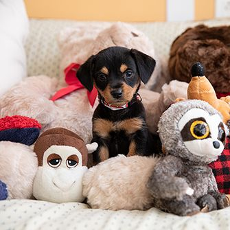 a puppy with stuff animals