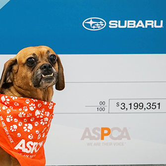 "The Results Are In: Subaru ""Shares the Love"" in a Big Way"