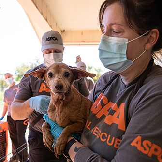 ASPCA responder carrying rescued dog