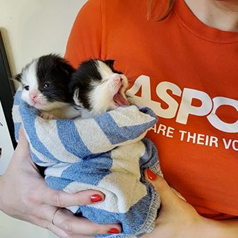 two neonate kittens being held by a woman with an ASPCA t-shirt