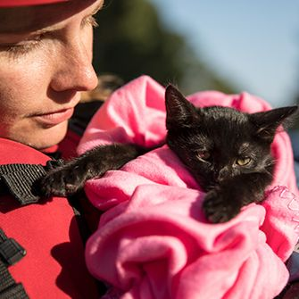 black cat in a pink blanket being held by a rescuer