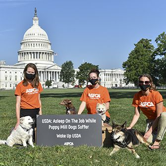 ASPCA petition delivery