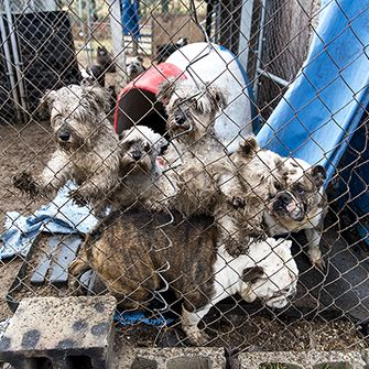 dogs standing on each other in a muddy kennel