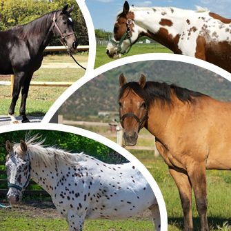 A Horse of a Different Color: Common Equine Coat Colors!