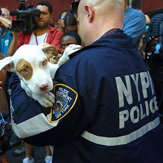a puppy being held by an NYPD officer