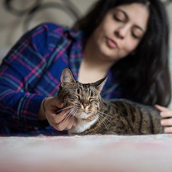 senior cat being pet