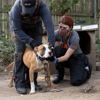 Matt's Blog: Dogfighting Persists—Here's How We Can End It