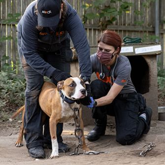 10 People Arrested and 89 Dogs Rescued from Alleged Interstate Dogfighting Ring