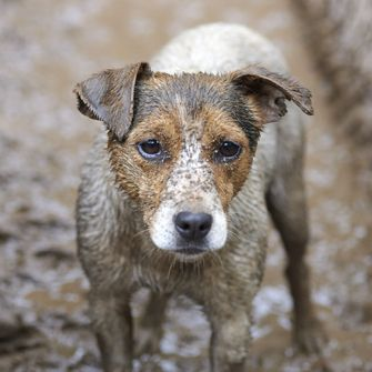 Puppy in mud