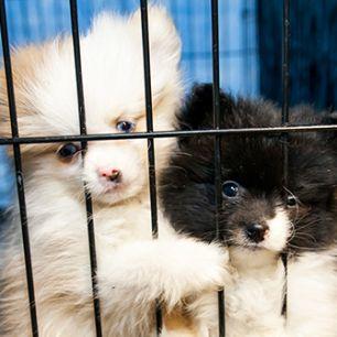 puppy mills aspca