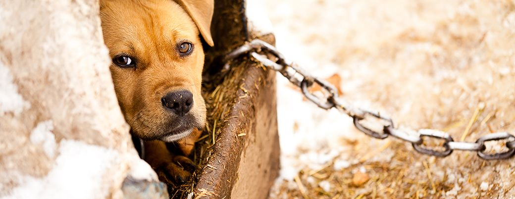 The Criminal, Underground World of Dog Fighting | ASPCA