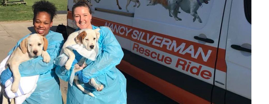 Nancy Silverman Rescue Rides