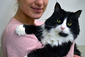 Woman holds a long-haired black and white cat