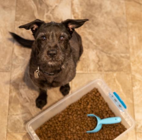 a dog and dry dog food