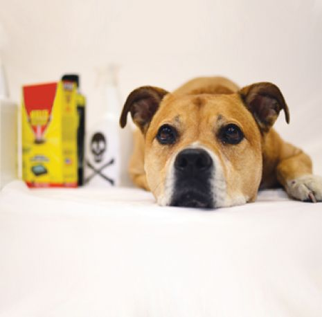 Dog next to cleaning supplies