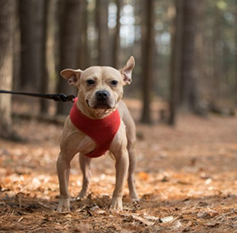 Aspca american society for the prevention of cruelty to animals 5 toxic seasonal plants you dont want your pet to fall for m4hsunfo
