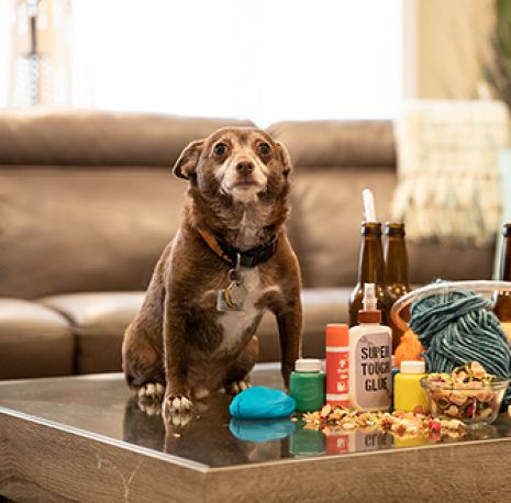 a dog on a table with arts and crafts equipment