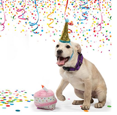 A white dog with a birth hat on and streamers in the background
