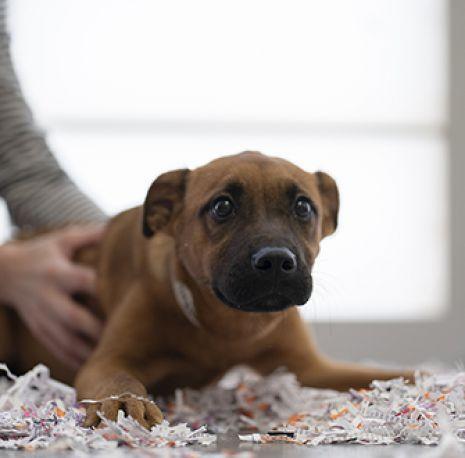 puppy in confetti