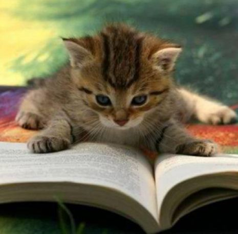 News | Animal Welfare | Breaking News & Stories | ASPCA