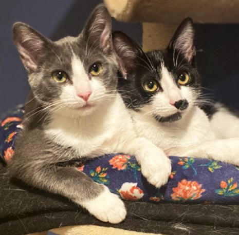 These Sisters Are Ready to Find a New Home Together!