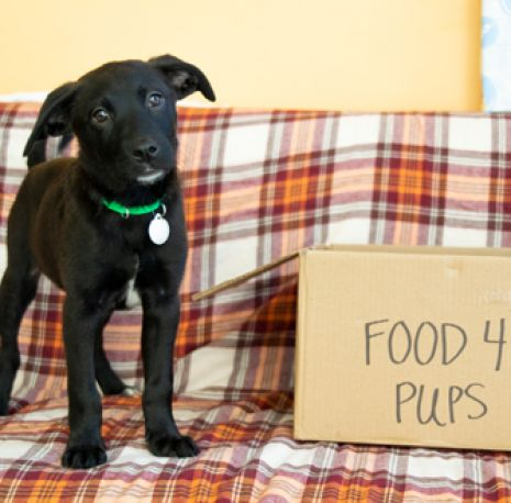 Food for puppies