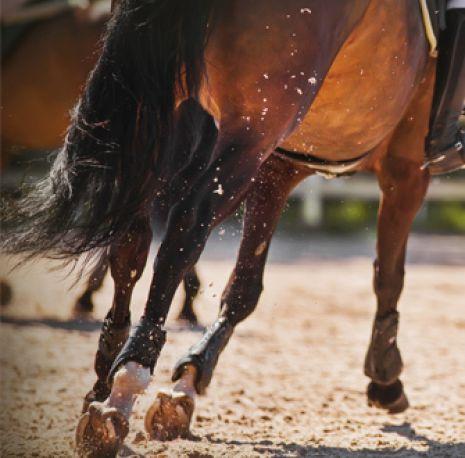 a brown horse running