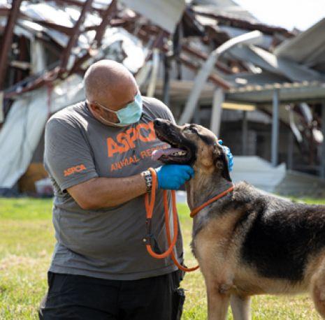Man rescuing dog