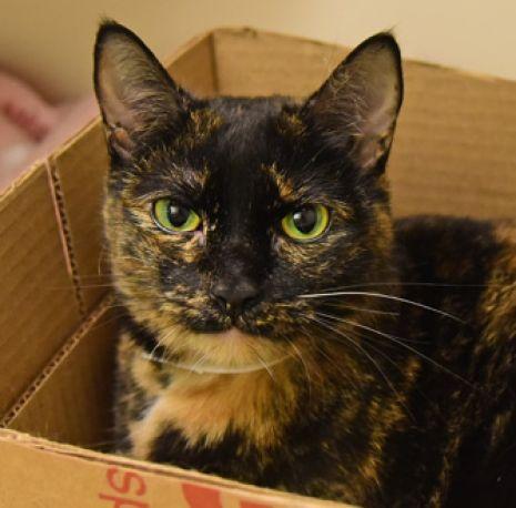 ASPCA Pet of the Week: Patina