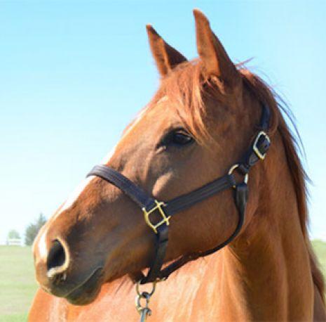 Adopt a Horse Month