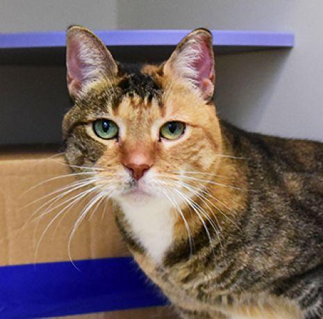 ASPCA Pet of the Week: Nala